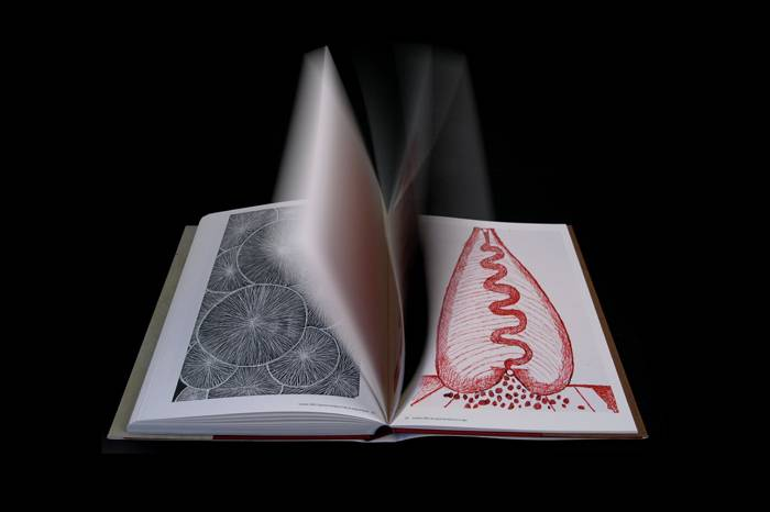 Kunstbuch Louise Bourgeois – Drawings and Sculpture